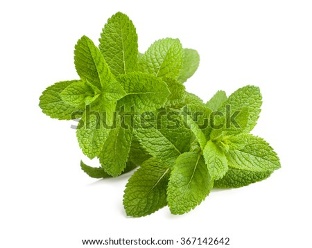 Fresh mint sprigs isolated on white background - stock photo