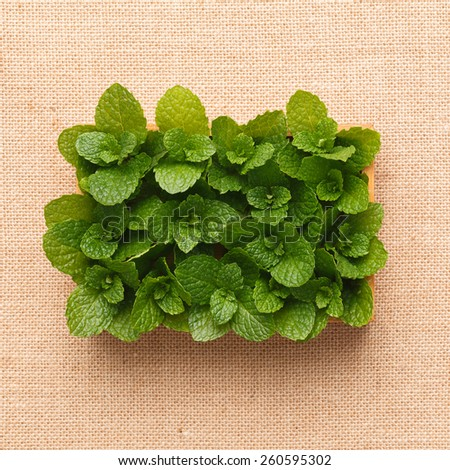 Fresh mint with drops of wate in a bamboo tray, burlap background - stock photo