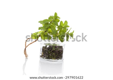 Fresh mitn and dry mint spice in glass jar isolated on white background. Culinary healthy aromatic herbs. Culinary arts. - stock photo