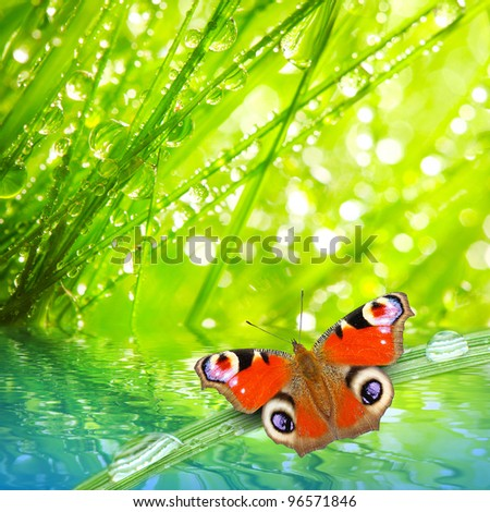 Fresh morning dew on a spring grass and butterfly, natural background - close up with shallow DOF. - stock photo