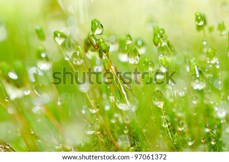 fresh moss and water drops macro in green nature or in forest