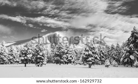 Fresh Mountain Snow (San Francisco Peaks, Arizona) - stock photo