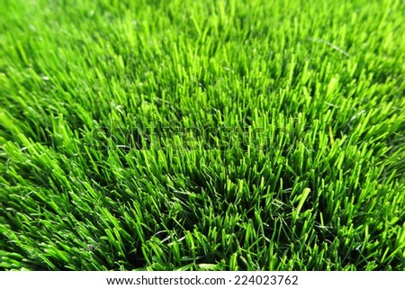 Fresh mown lawn grass in the sunny garden - stock photo
