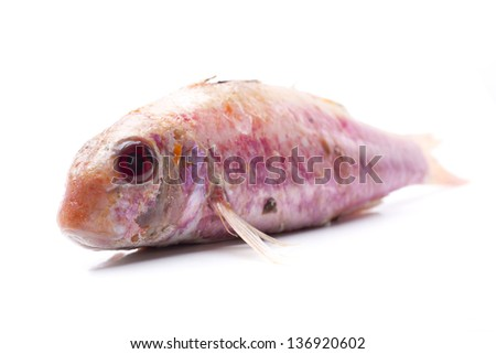 Saffron cod stock photo 604534811 shutterstock for Eating mullet fish