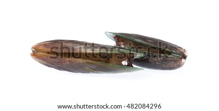 Fresh mussel isolated on white background