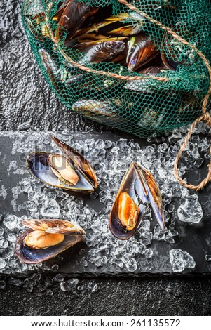 Fresh mussels on black rock - stock photo