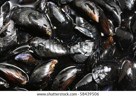 Fresh Mussels ready to cook