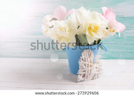 Fresh  narcissus and pink tulips in bucket with decorative heart  in ray of light  on white painted wooden background against turquoise wall. Selective focus. Place for text.  - stock photo