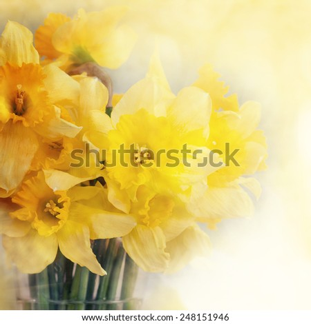 Fresh narcissus, greeting card for mothers day, 8 March, Valentintines Day - stock photo