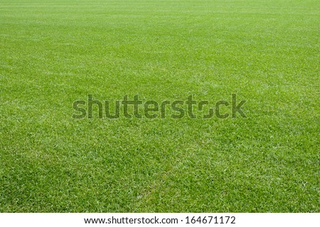 Fresh natural lawn grass - stock photo