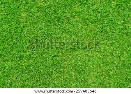 Fresh natural lawn grass. - stock photo