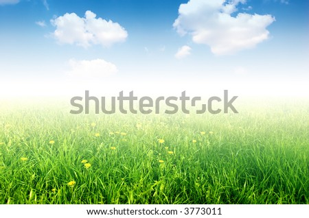Fresh nature background. Grass with little yellow flowers on bright blue sky