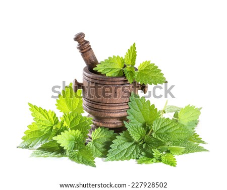 fresh nettle leaves with a mortar on a white background - stock photo