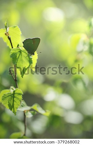 fresh new green leaves glowing in sunlight - stock photo