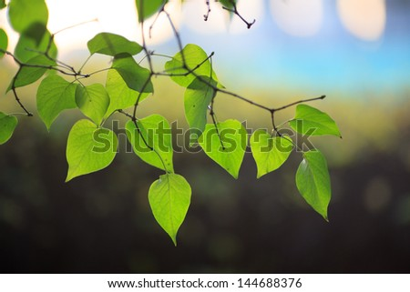 Fresh new green leaves on tree branch over blur background - stock photo