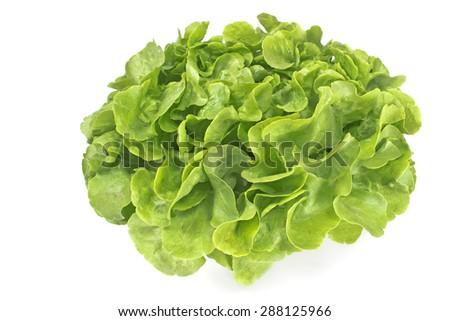 Fresh oak leaf lettuce isolated on white - stock photo