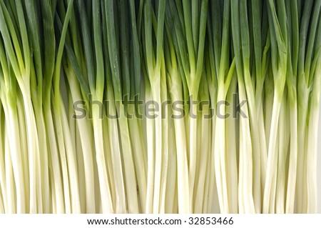 fresh onions background - stock photo