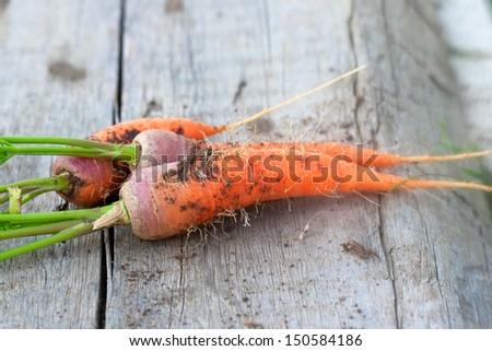 fresh orange carrot on the wood plank - stock photo