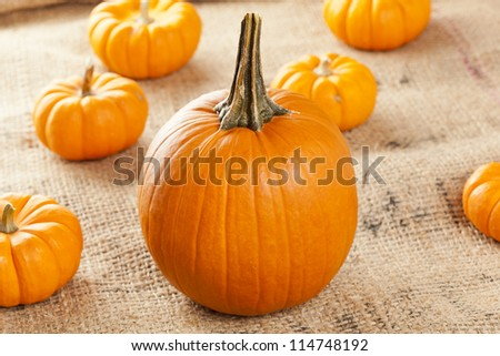 Fresh Orange Organic Pumpkin against a background