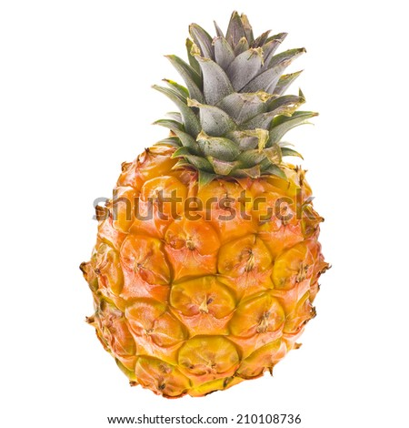 fresh orange small pineapple, variety Canarian  isolated on white background - stock photo