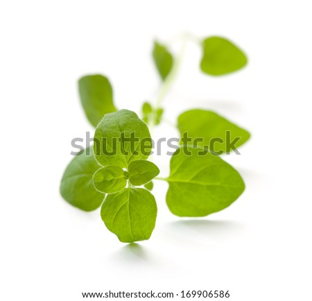 Fresh oregano - stock photo
