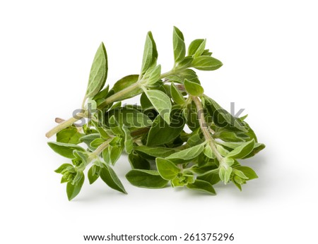 Fresh oregano isolated on white background - stock photo