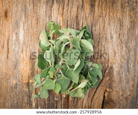Fresh oregano on wooden background  - stock photo