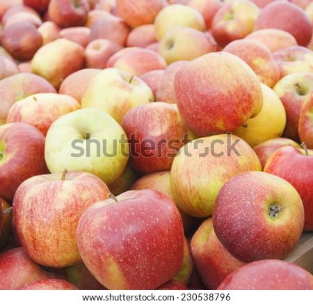 Fresh organic apples background - stock photo
