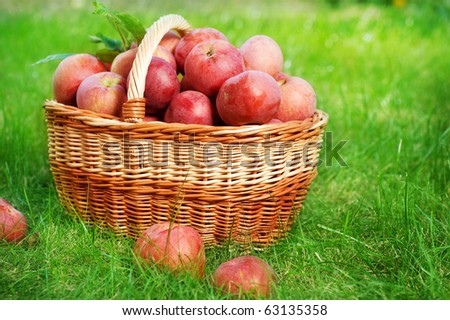 Fresh Organic Apples in the Basket - stock photo