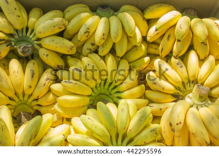 Fresh organic Banana  on  wooden  background. Bright yellow ripe bananas to eat on the table wood and  hunger sustain a healthy food. - stock photo