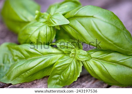 Fresh organic basil leaves on wooden table - stock photo