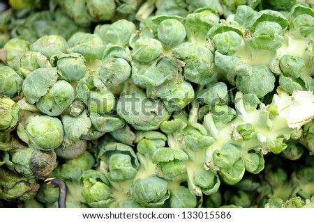 Fresh organic brussels sprout tree - stock photo