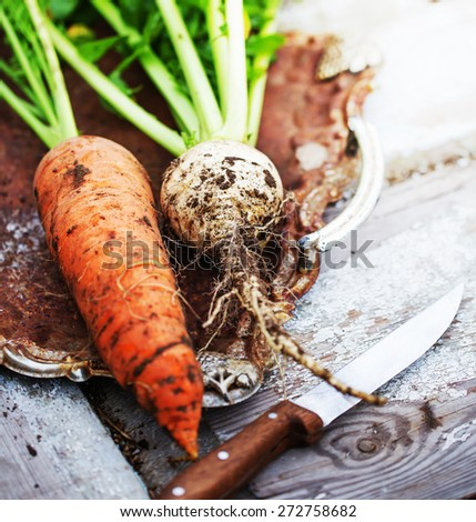 fresh organic carrot and parsnip on wooden background  - stock photo