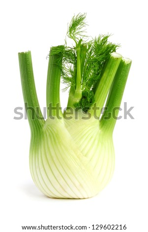Fresh, organic fennel on a white background - stock photo