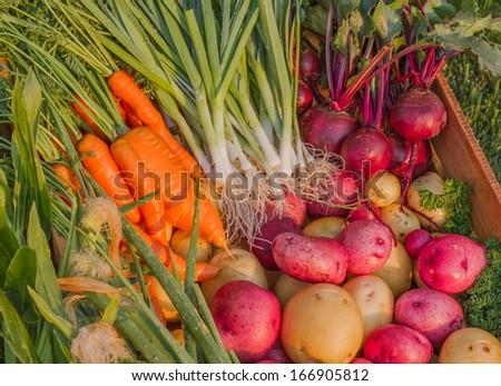 Fresh Organic Garden Vegetables - stock photo