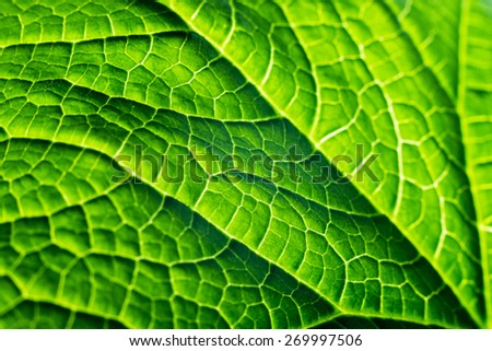 fresh organic green plant leaf macro close-up background, energy and the nature of summer - stock photo