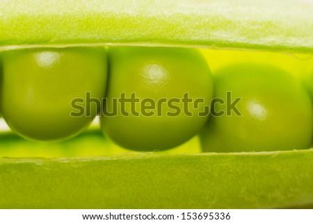 Fresh Organic Peas in a pod - Close up - stock photo