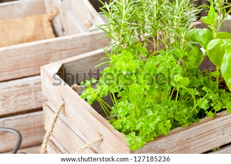 Fresh organic potted herbs in wooden crate on table