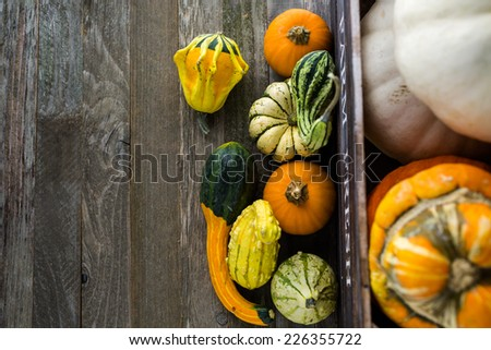 Fresh organic pumpkins from the local farmers market. - stock photo