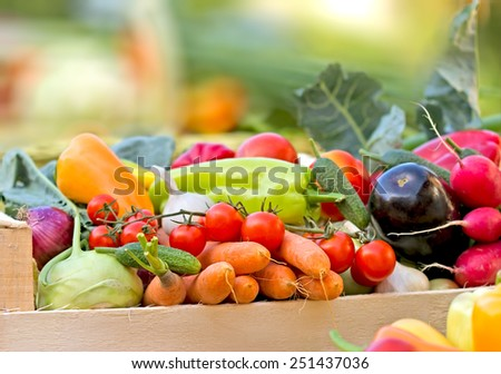 Fresh organic vegetables - stock photo