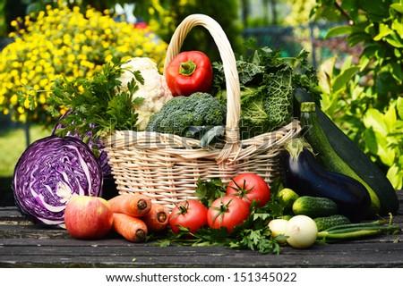Fresh organic vegetables in the garden - stock photo