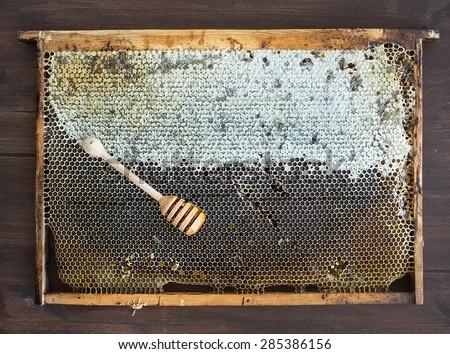 Fresh organic village honey in honeycombs with honey stick, top view - stock photo