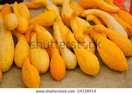 Fresh organic yellow squash at the local farmers market - stock photo