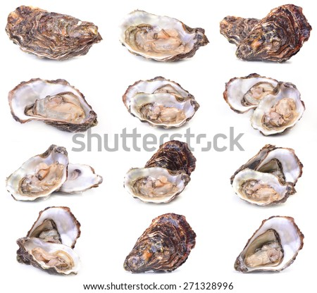 Fresh oyster collection - stock photo