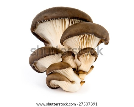 fresh oyster mushrooms  arranged on a white background. - stock photo