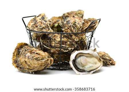 Fresh oyster on white background - stock photo