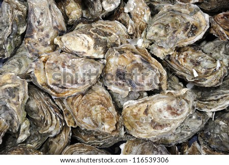 Fresh oysters at a French market - stock photo