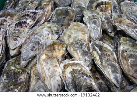 Fresh oysters for sale at a fish market