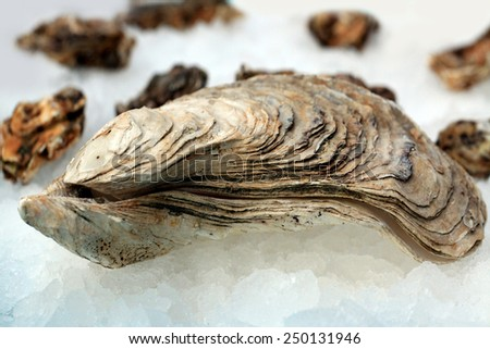 Fresh oysters on the ice table - stock photo