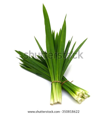 Fresh Pandan leaves isolated on white background